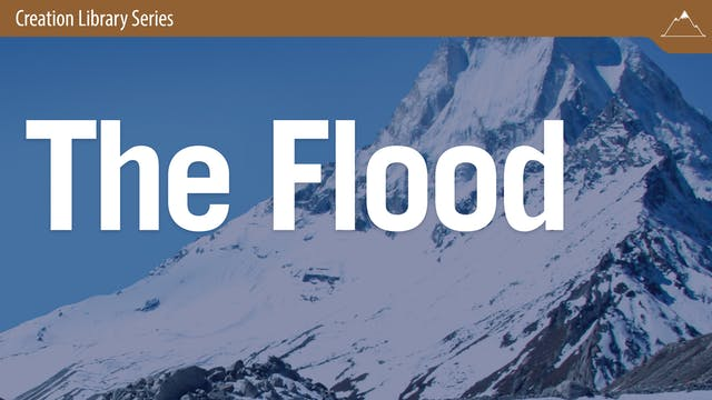 "The Flood: The ""Big Picture"" of Its M..."