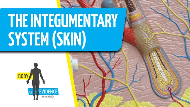 Integumentary System (Skin) 2