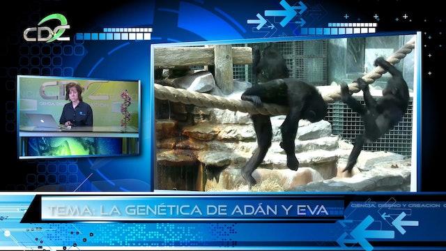 Genética y la Biblia Episodio 12: La genética de Adán y Eva Pt 1