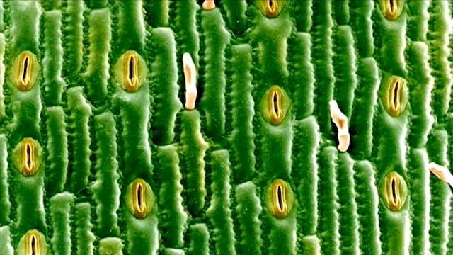 حياة النباتات