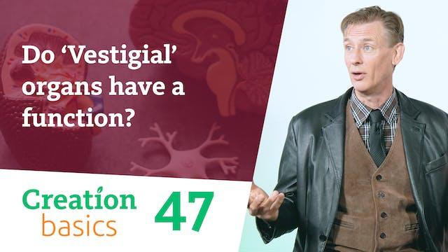 Do 'vestigial' organs have a function?