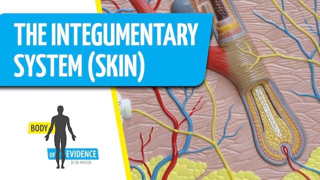 Integumentary System (Skin) 1