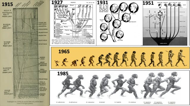 Human Evolution Tree and March of Pro...