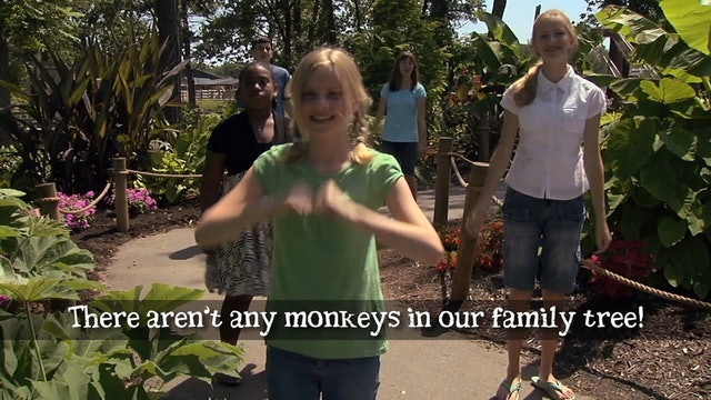 There Aren't Any Monkeys