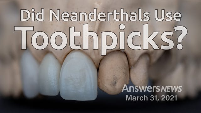 3/31 Did Neanderthals Use Toothpicks?