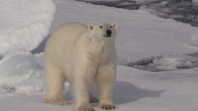 The Norway Polar Bear Expedition