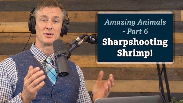 Amazing Animals 6 of 7 - Sharpshooting Shrimp!