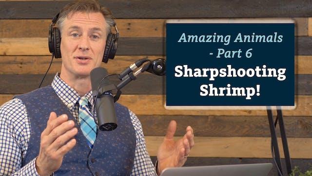 Amazing Animals 6 of 7 - Sharpshootin...