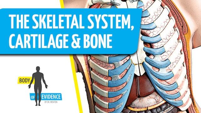 Skeletal System 1