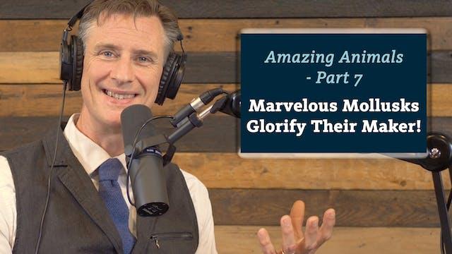 Amazing Animals 7 of 7 - Marvelous Mo...