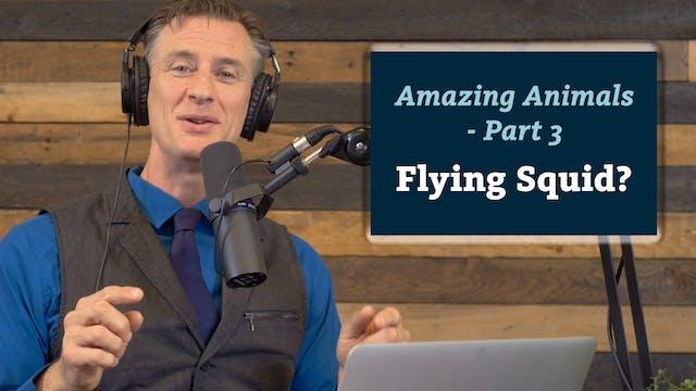 Amazing Animals 3 of 7 - Flying Squid?