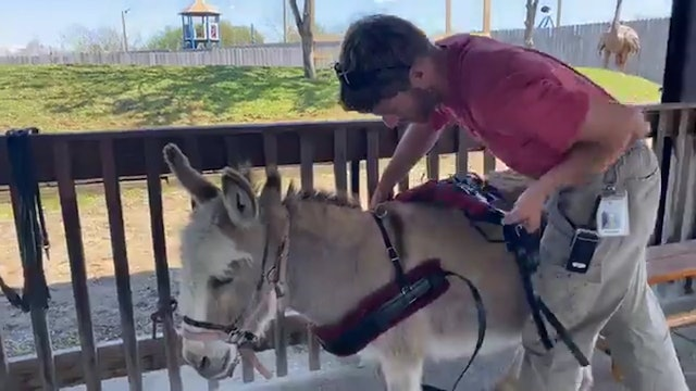 Watch Ella the Donkey Pull Her Cart