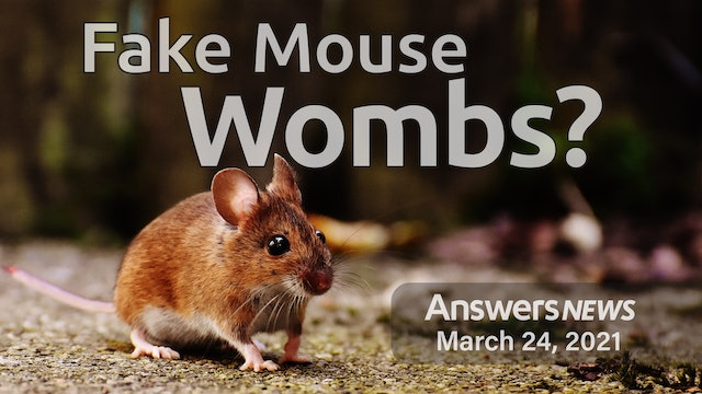 3/24 - Fake Mouse Wombs - Good or Evil?
