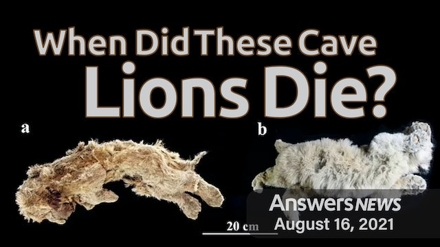 8/16 When Did These Cave Lions Die?