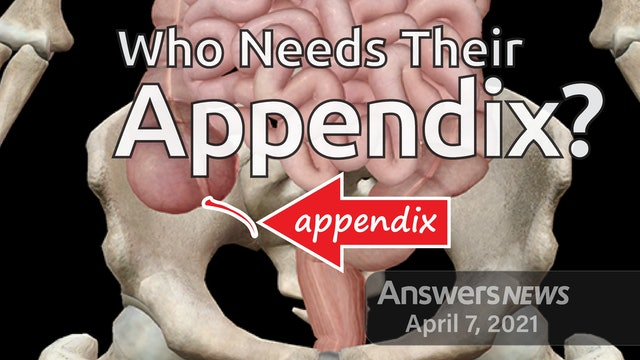 4/07 Who Needs Their Appendix?