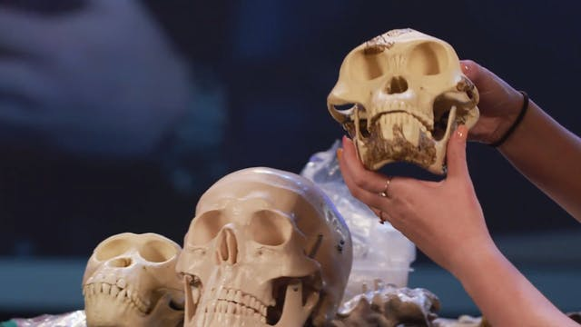 Genesis Impact Clip - Australopithecu...