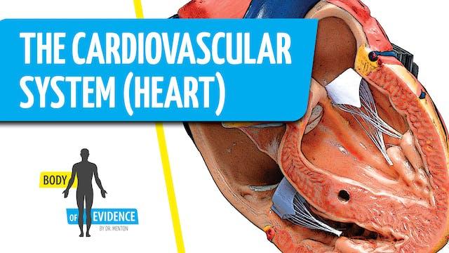 Cardiovascular System (Heart) 1