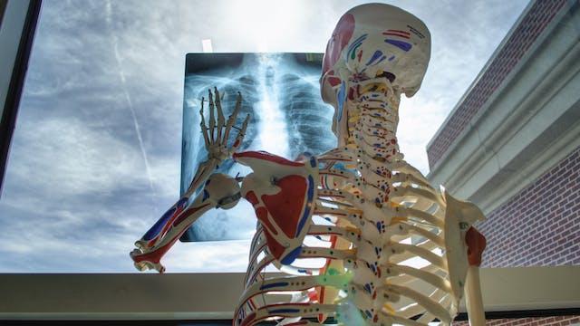 God's Girders - Bones of our Bodies