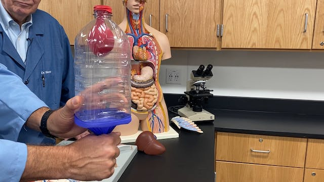 Hands On: Lung Capacity
