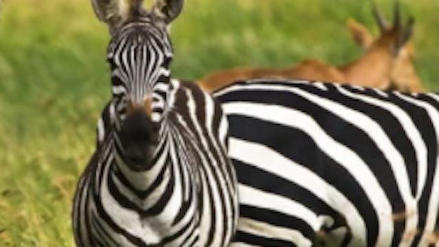 Kids' Animal Videos