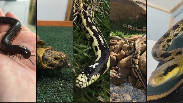 Five New Creatures