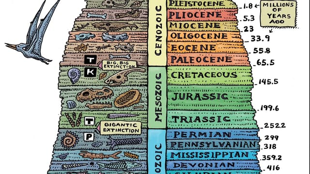 The Fossil Record and Transitional Forms