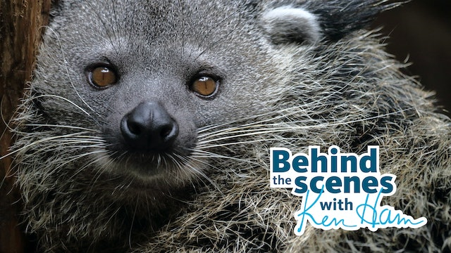 Meet the Binturong and Porcupines with Ken Ham & Leanne