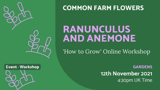 21.11.12 (Fri Nov 12th) | Ranunculus ...