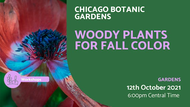 21.10.12 (Tue Oct 12th) | Woody Plant...