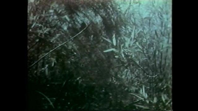 Death Curse of Tartu - Trailer