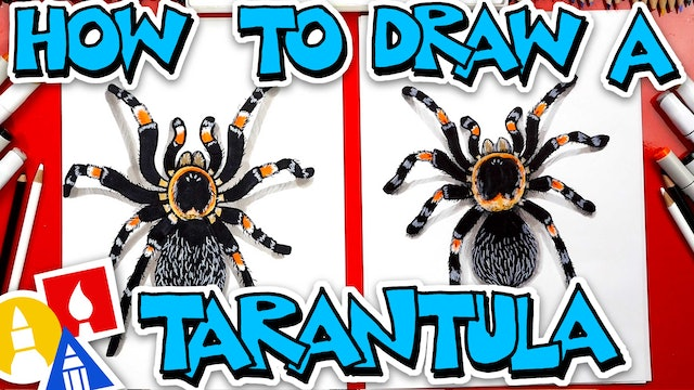 How To Draw A Tarantula (Red Knee)