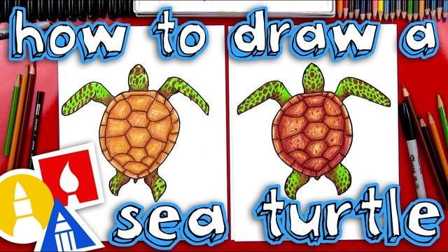 How To Draw A Realistic Sea Turtle Member