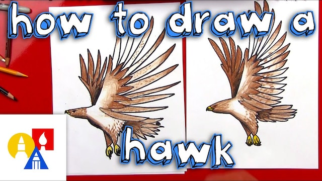 How To Draw A Realistic Hawk