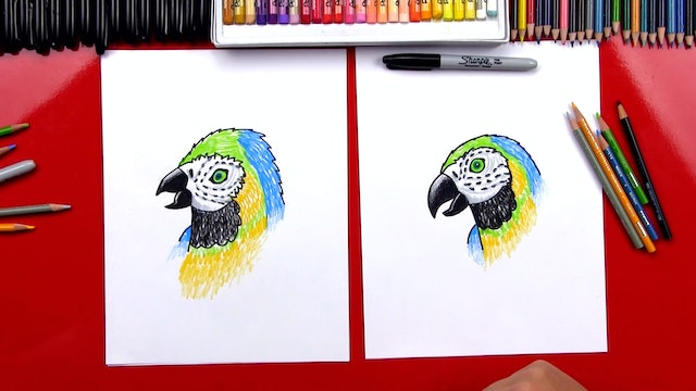 Member - How To Draw A Realistic Parrot + Proportions