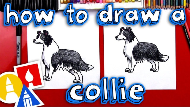 How To Draw A Border Collie