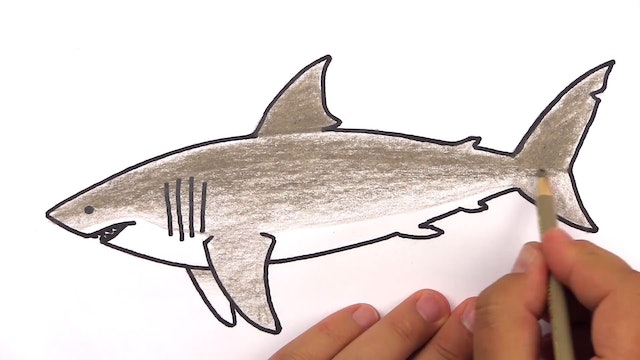 Member - How To Draw A Realistic Great White Shark
