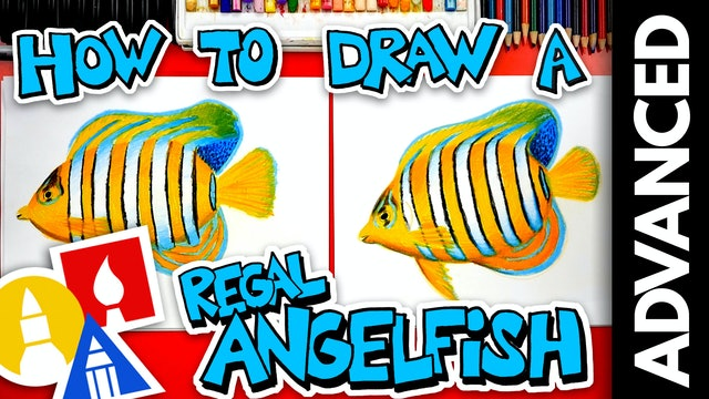 How To Draw A Regal Angelfish - Advanced