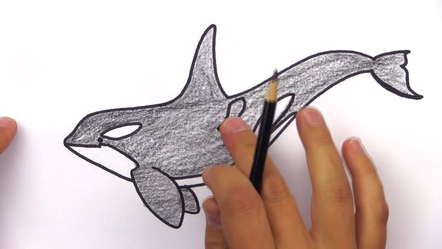 Member - How To Draw A Realistic Orca