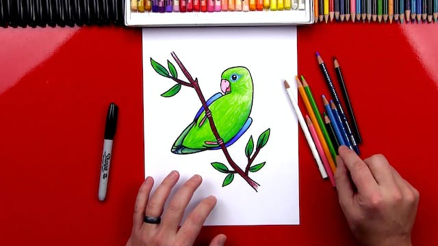 How To Draw A Realistic Parrotlet