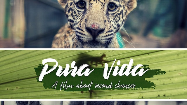 Pura Vida - The Animal Encounters Movie