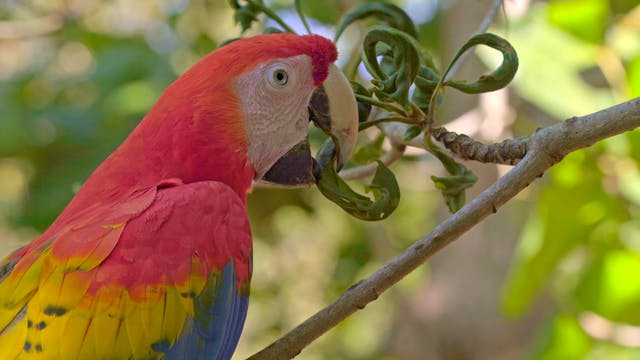 Macaw Sanctuary