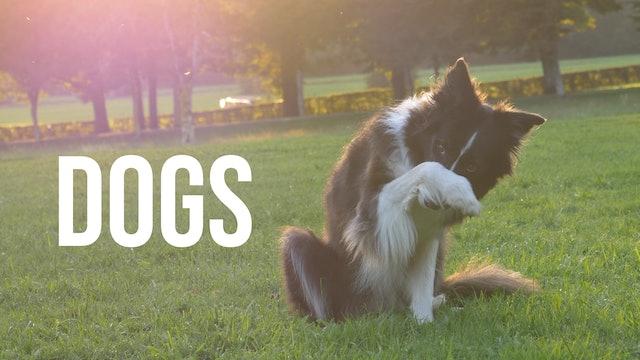 Creation's Chorus - Dogs