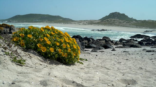 Creation's Chorus: Langebaan