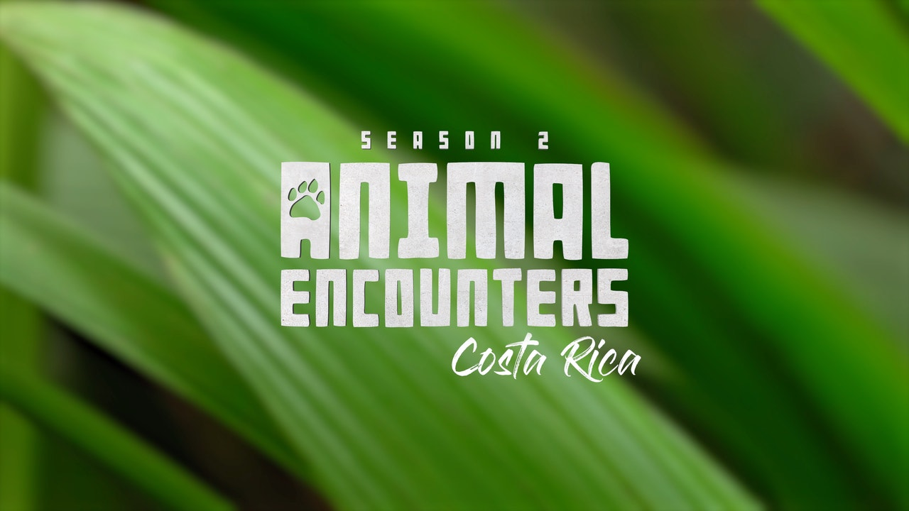 Animal Encounters II