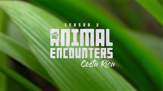Animal Encounters II