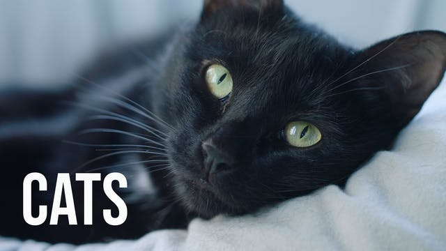 Creation's Chorus - Cats