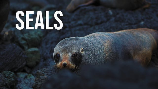 Creation's Chorus -Seals