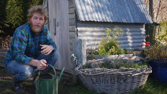 This Wild Idea! - Gardening