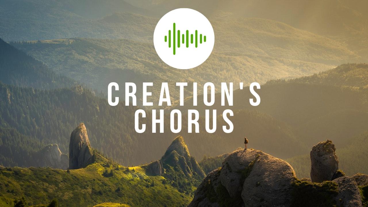 Creation's Chorus