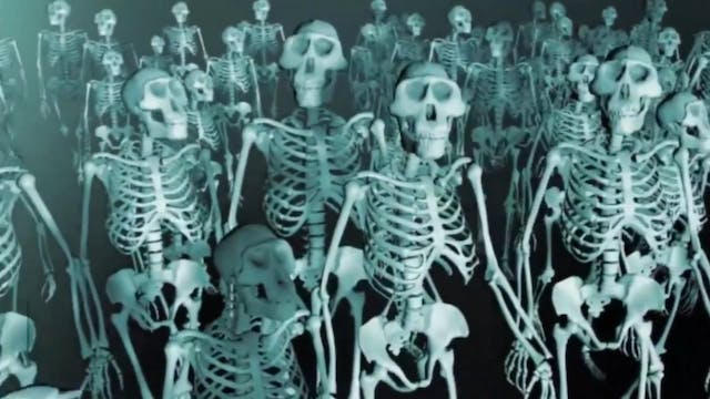Is Lucy the Australopithecine an Ape-...